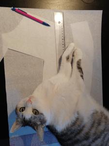 Kera le chat